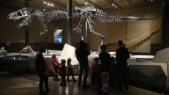 Tristan el tiranosaurio rex