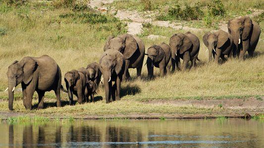 Una elefanta herida aplasta y mata a un cazador profesional