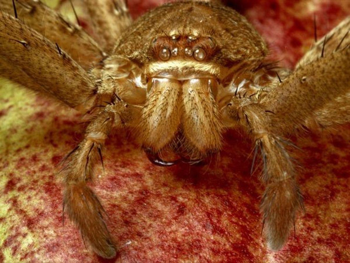 Exoesqueleto de araña