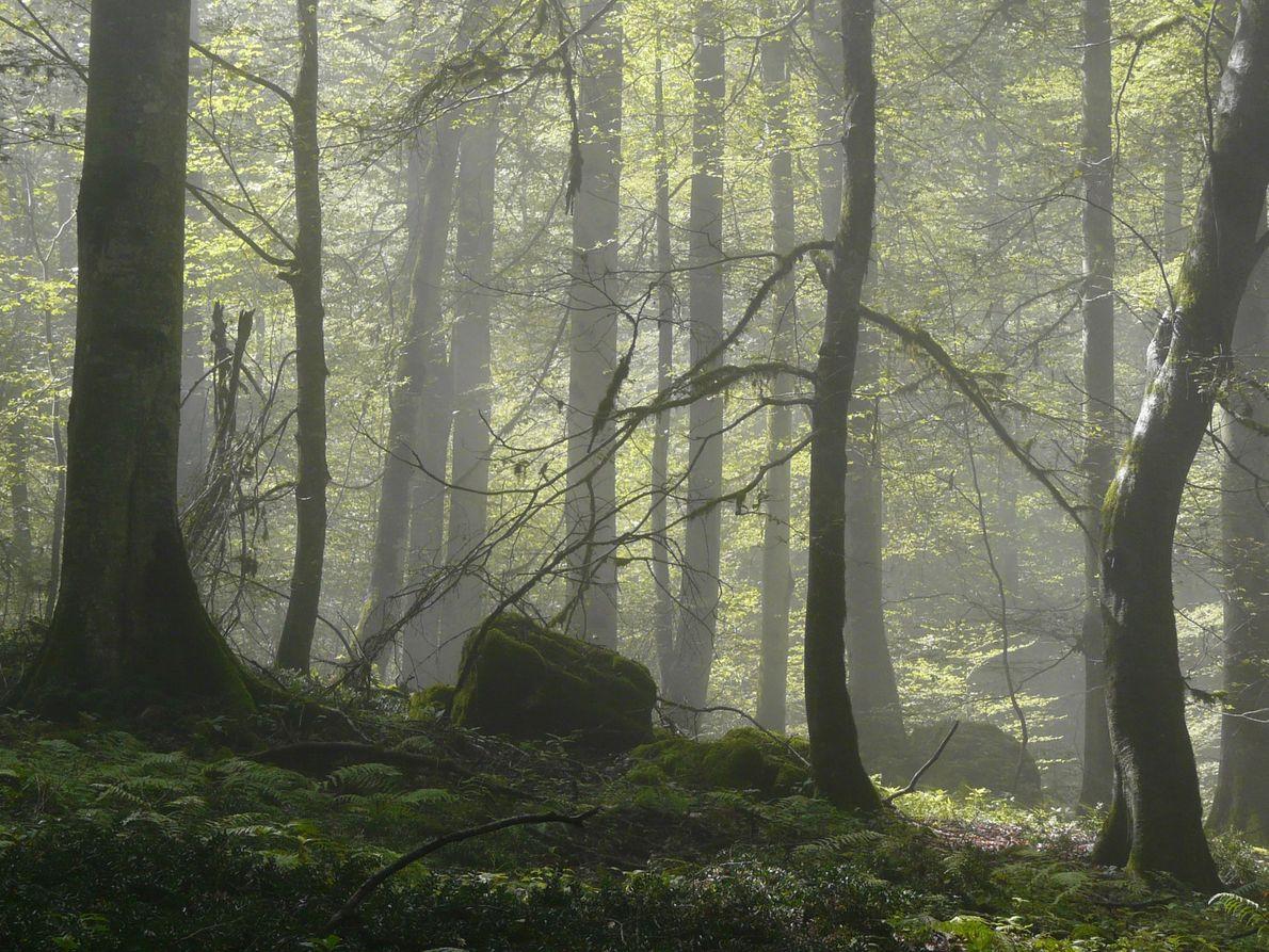 Bosques Hircanianos, Irán