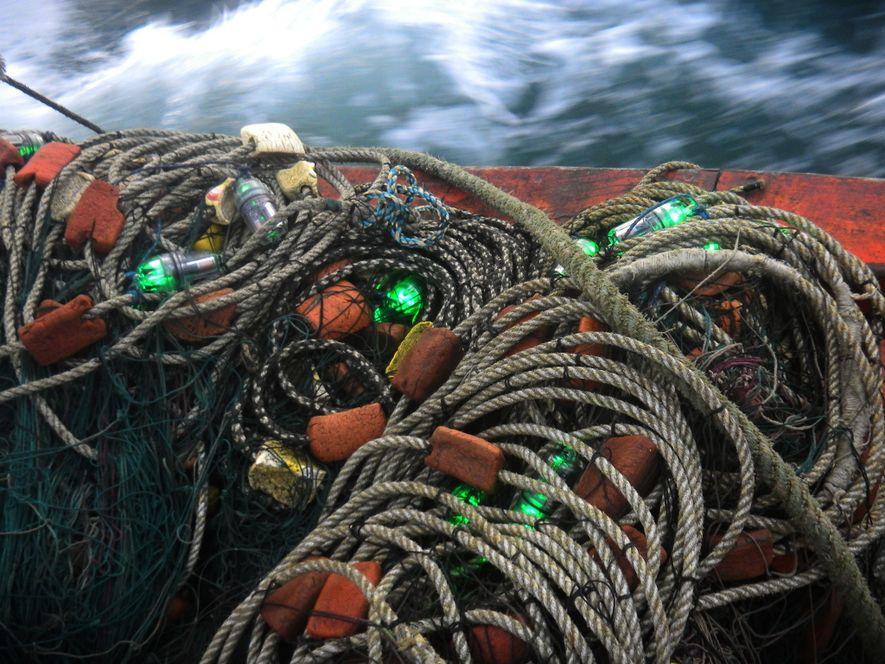 En los estudios realizados en la costa de Perú se colocaron 114 redes de pesca con ...