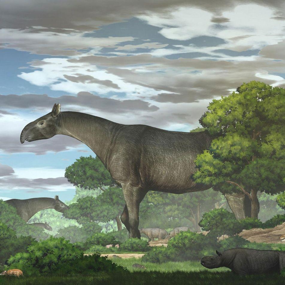 Descubren los fósiles de un rinoceronte más alto que una jirafa en China