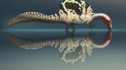¿Cazaba el Spinosaurus como las aves zancudas?