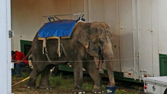 Los elefantes de este zoo de carretera sufrieron durante años antes de morir, según nuevos documentos