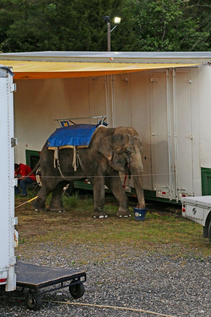 Minnie es la última elefante del zoo de Commerford