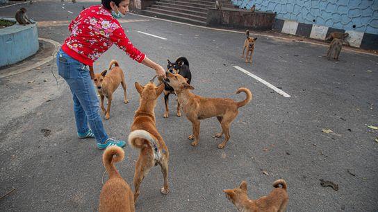 Oineetam Oza da galletas a perros y monos