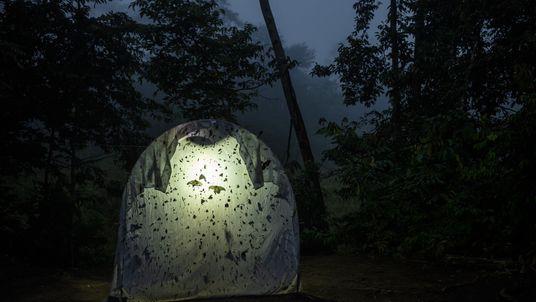 Los insectos están desapareciendo a una velocidad alarmante, pero podemos salvarlos