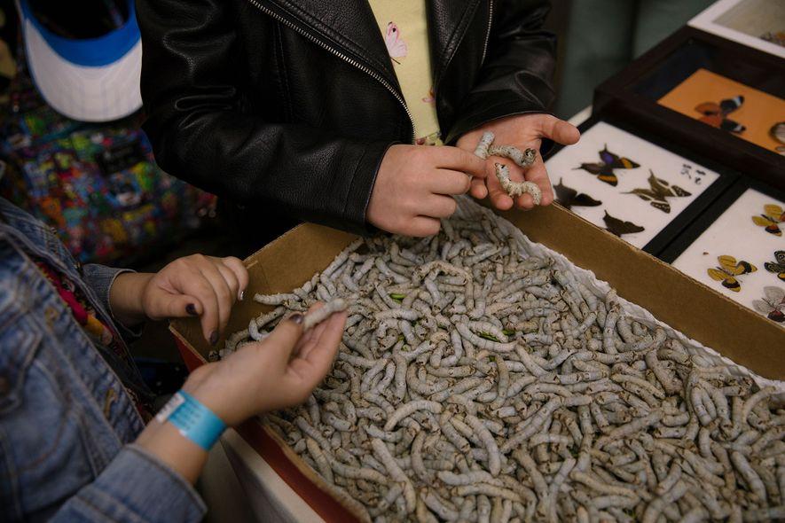 Los gusanos de seda atraen a mucha gente a la Bug Fair. No son los únicos animales vivos en venta: los asistentes pueden elegir entre tarántulas, escorpiones e incluso cucarachas.