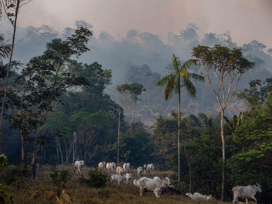 Un nuevo informe indica que proteger la tierra y los animales mitigará las futuras pandemias