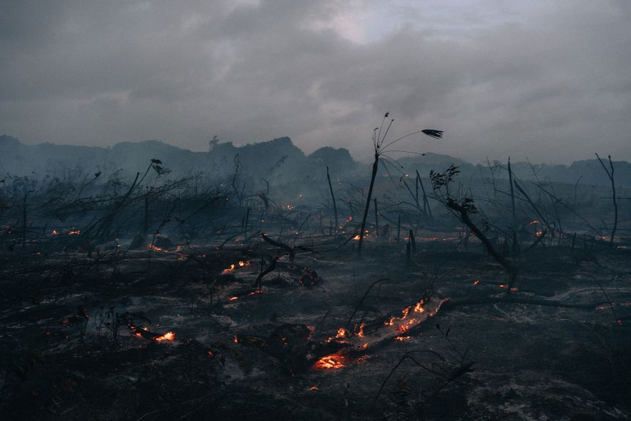 La tierra arde cerca de Belmopán. Los terratenientes de Belice suelen quemar y despejar la selva ...
