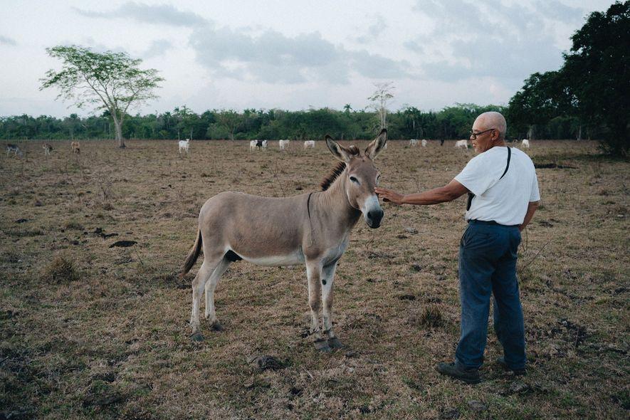 Napoleón, el burro de guardia, en la hacienda de Juan Herrera, en la región central de ...