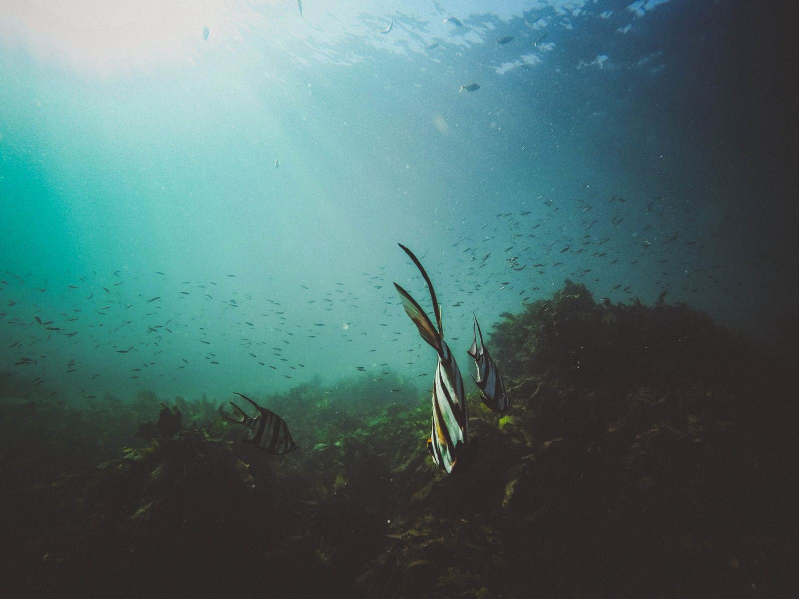 Algas oceano