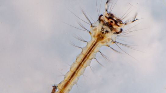 Ácaros e insectos acuáticos