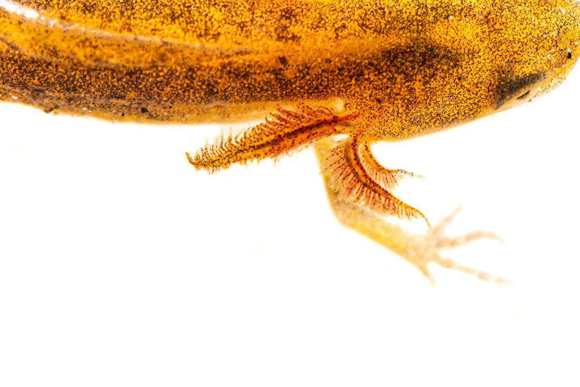 Anfibios y animales  acuáticos