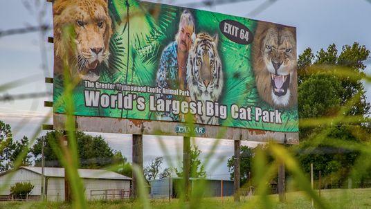 La reapertura del zoo de «Tiger King» expone a los grandes felinos al coronavirus