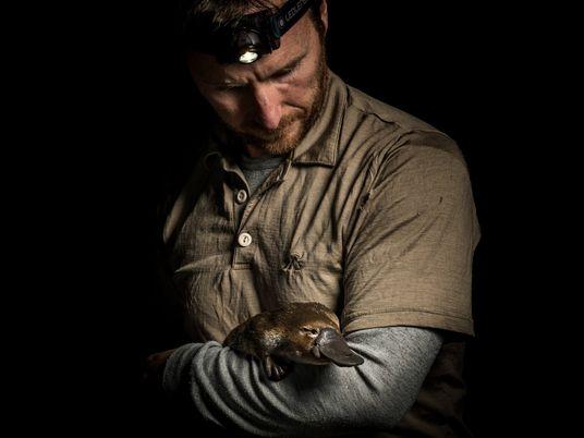 Los científicos advierten que los ornitorrincos están cada vez más amenazados