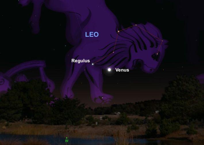 Venus y Regulus