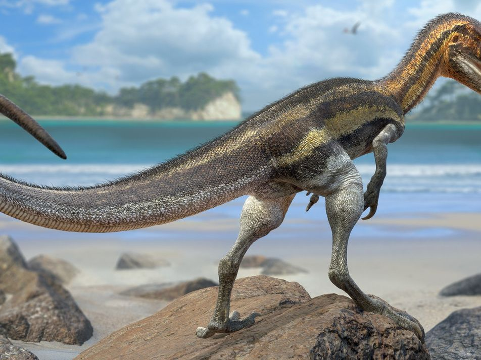 Los fósiles de este pequeño dinosaurio revelan que tenía un gran sentido del tacto