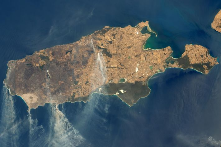 Isla Canguro
