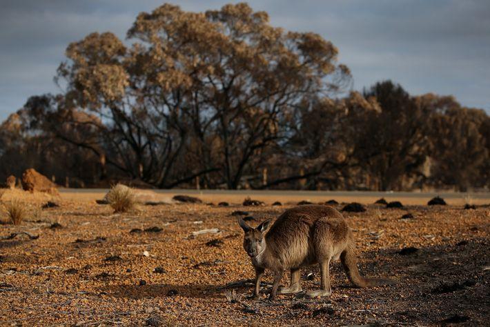 Parque nacional de Flinders Chase