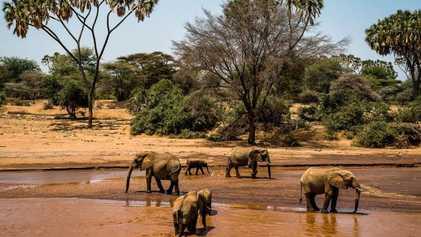 Cómo el ecoturismo ayuda a elefantes y personas a salir adelante