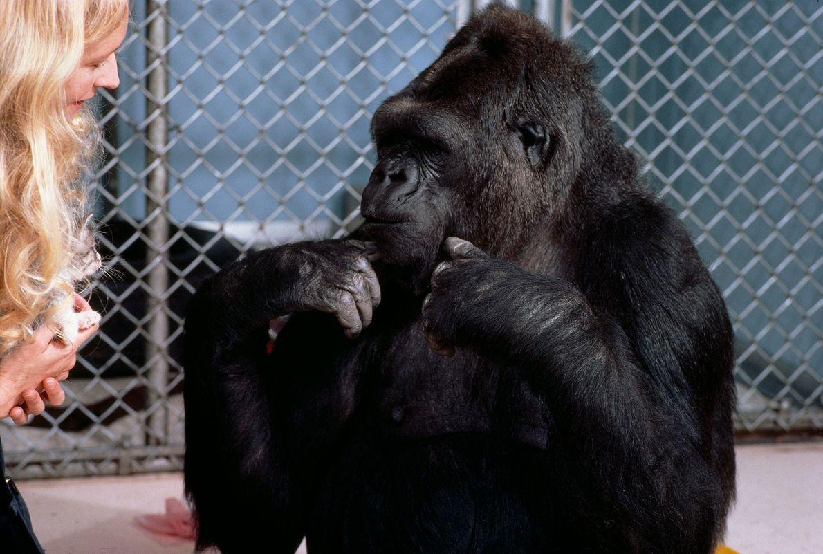Patterson y Koko