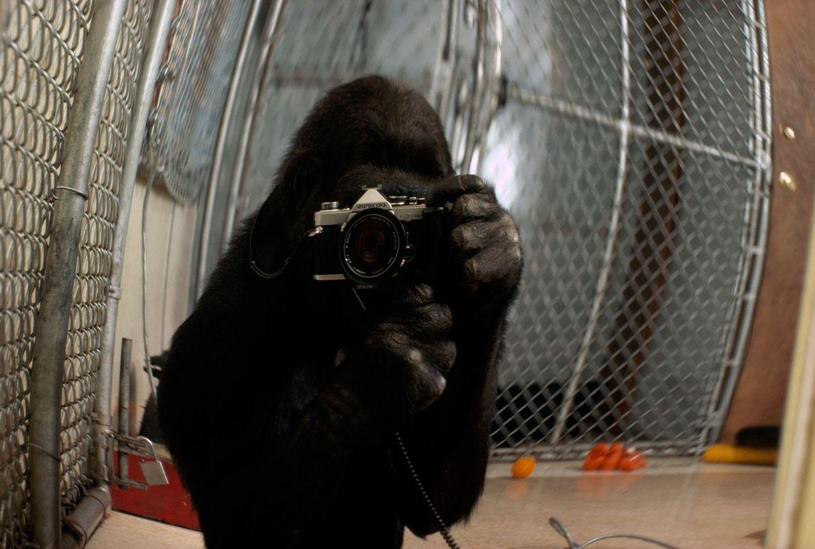 Selfi Koko