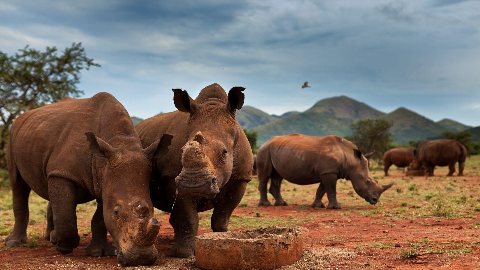 Fotografía de rinocerontes en la reserva de John Hume