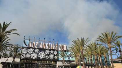 Así protegen y evacuan a los animales de zoo en los incendios forestales