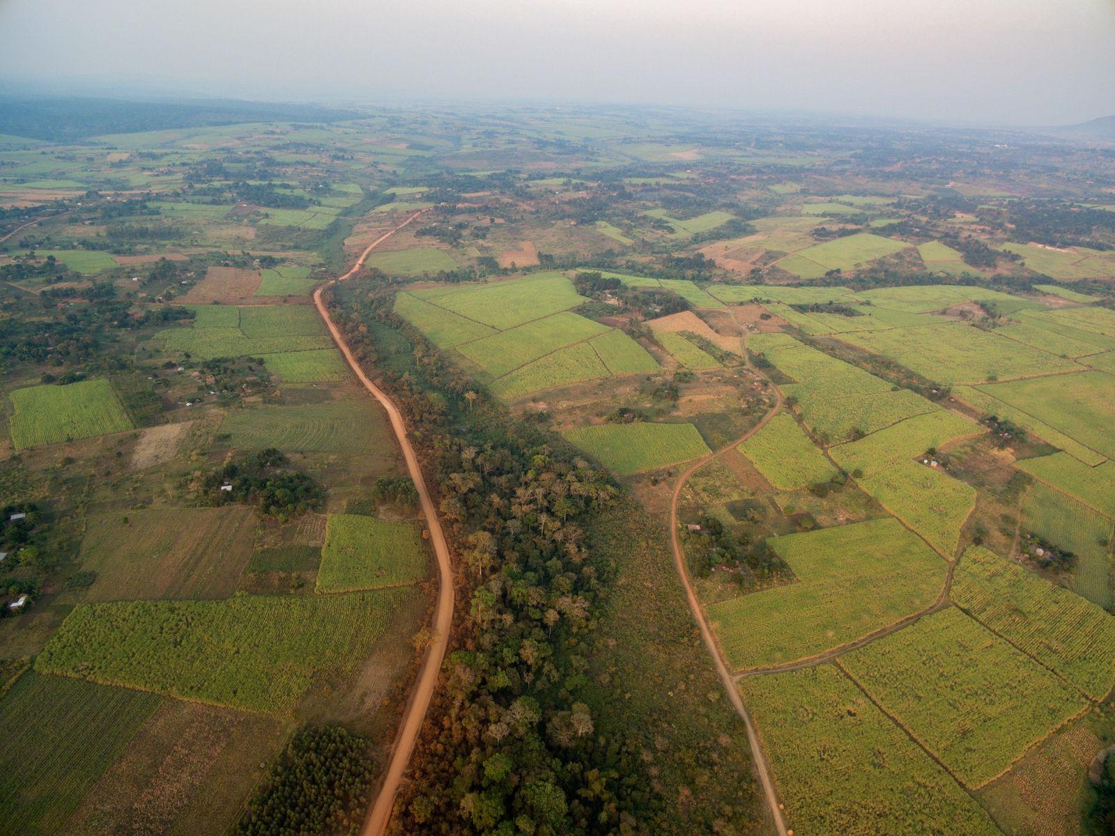 Plantación de azúcar de Kinyara