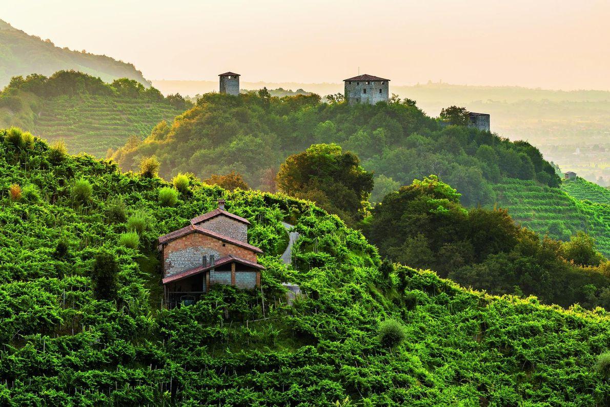 Colinas de vides del prosecco de Conegliano y Valdobbiadene, Italia
