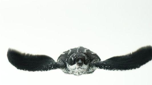 ¡Feliz Día Mundial de las Tortugas Marinas!