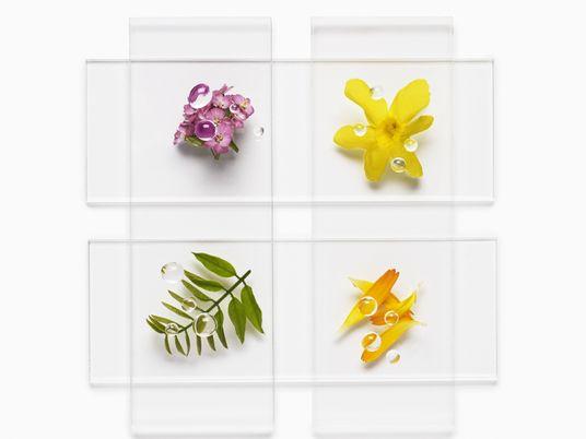 Productos de belleza veganos, sabiduría milenaria al servicio de la cosmética sostenible