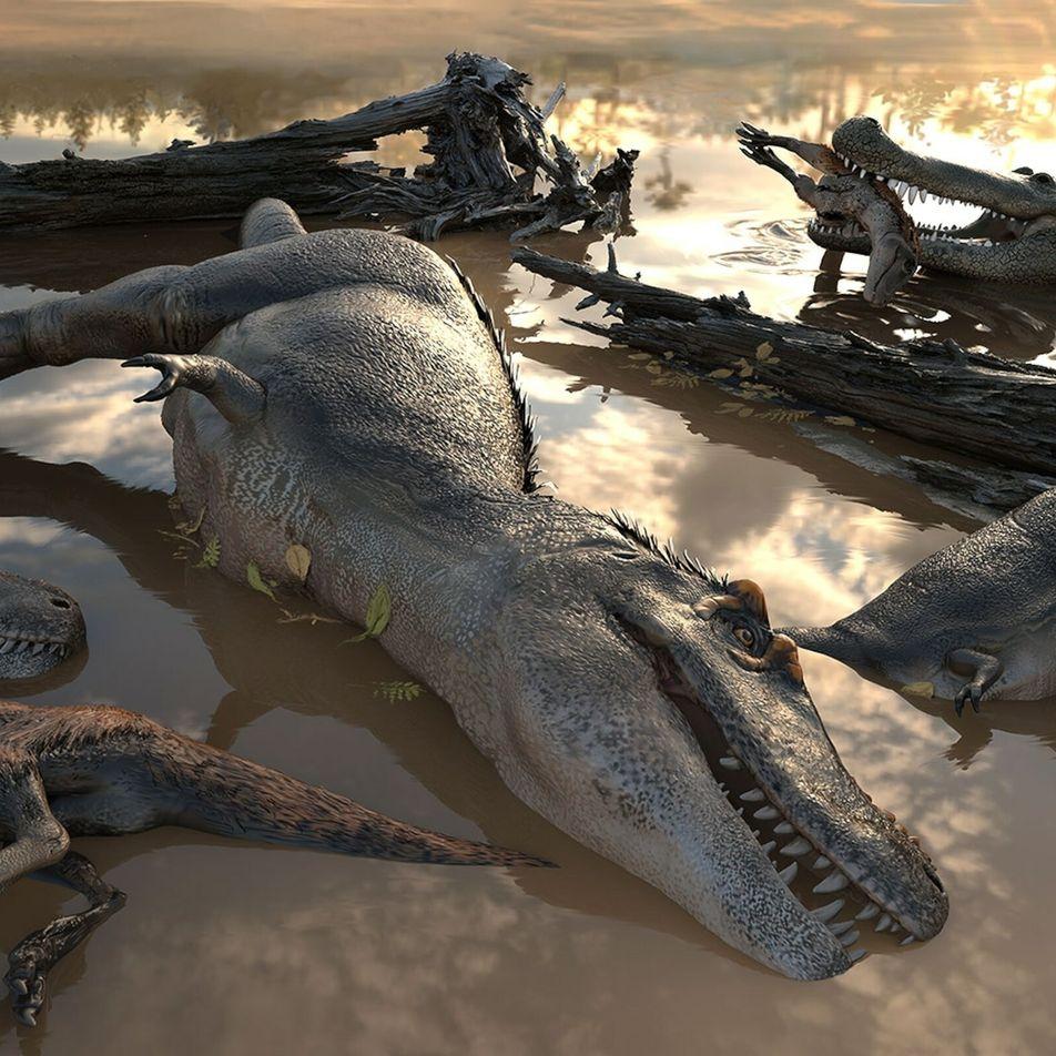 ¿Vivían los tiranosaurios en grupos? Los expertos debaten nuevas pistas fósiles