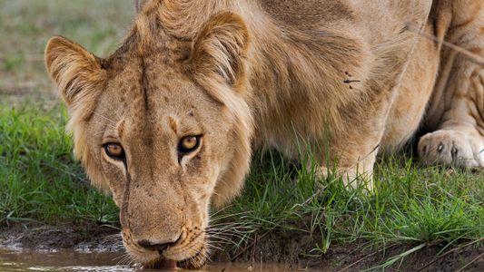 Para salvar a los animales, los gobiernos africanos recurren a la gestión privada