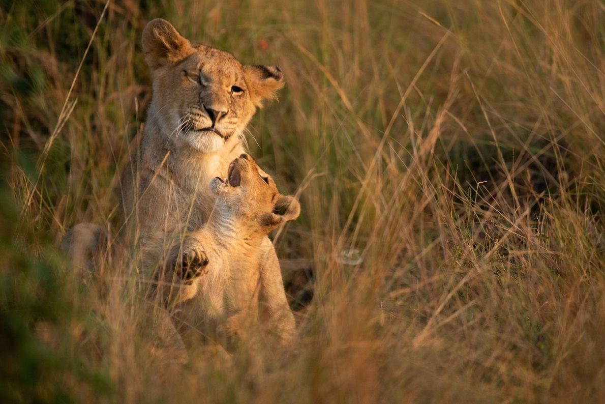 Masái Mara, Kenia