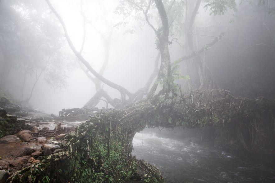 Un velo de niebla cubre un puente de raíces vivas en East Khasi Hills, Meghalaya.