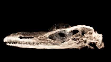 El que se consideraba el dinosaurio más pequeño del mundo es en realidad un lagarto