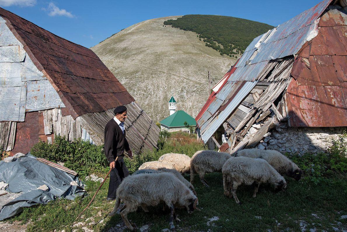 Un pastor guía a su rebaño