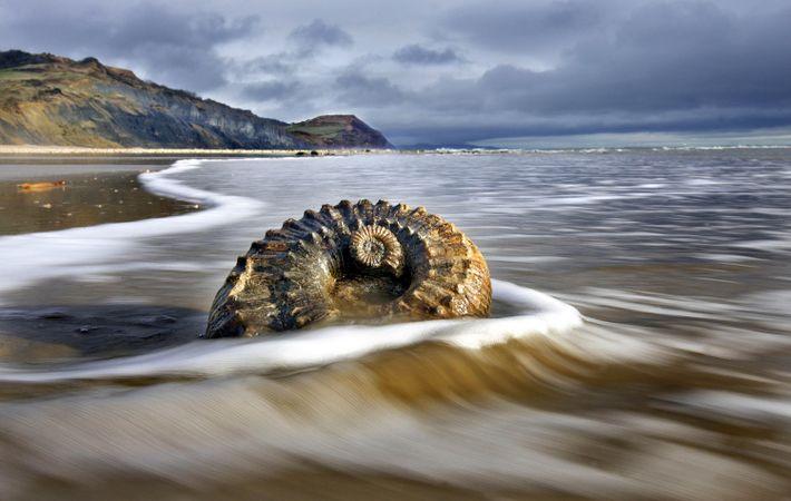 Imágenes de fósiles en la playa de la costa Jurásica cerca de Lyme Regis, Inglaterra