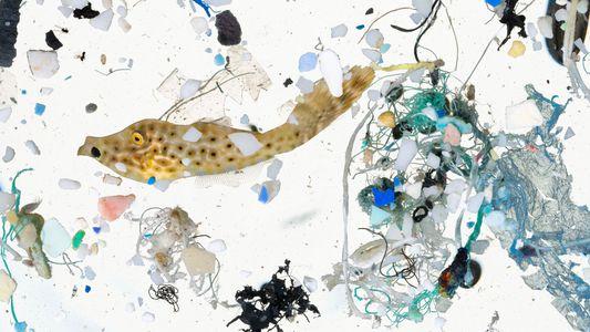 Estas imágenes revelan el plancton que se ve obligado a convivir con el plástico