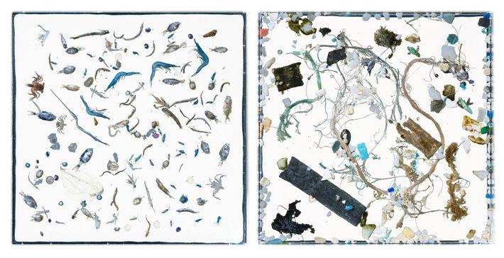 Animales y plástico