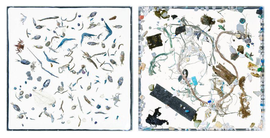 En estas imágenes, los animales marinos (izquierda) y los desechos plásticos (derecha) se separan en fotografías ...