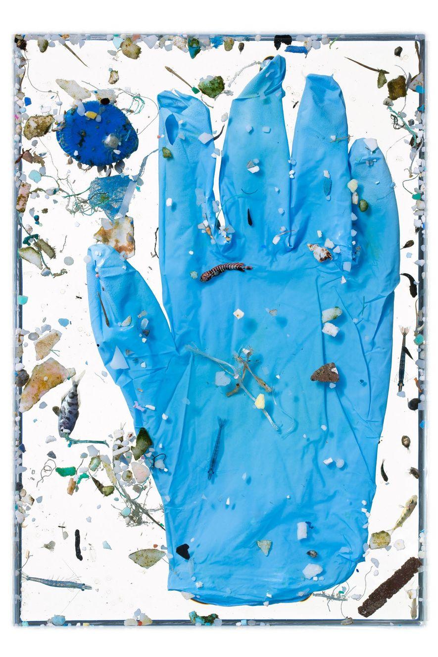 Los alevines, como un joven dorado (centro), nadan entre restos como guantes de goma y fragmentos ...