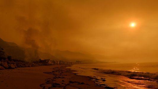 ¿Es el humo de los incendios forestales perjudicial para los cetáceos?