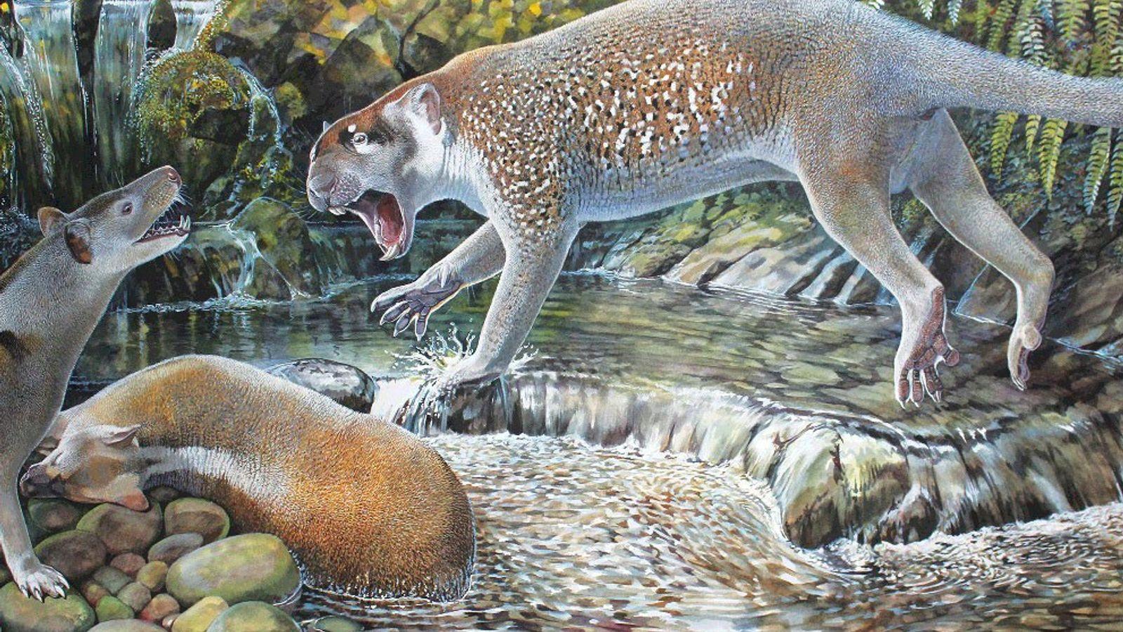 León marsupial