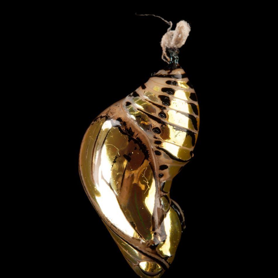 De oruga a mariposa: así se produce la metamorfosis