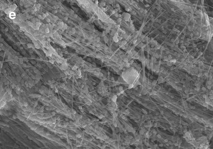 Una imagende una muestra del abismo de las Sirenas obtenida con un microscopio electrónico de barrido. ...