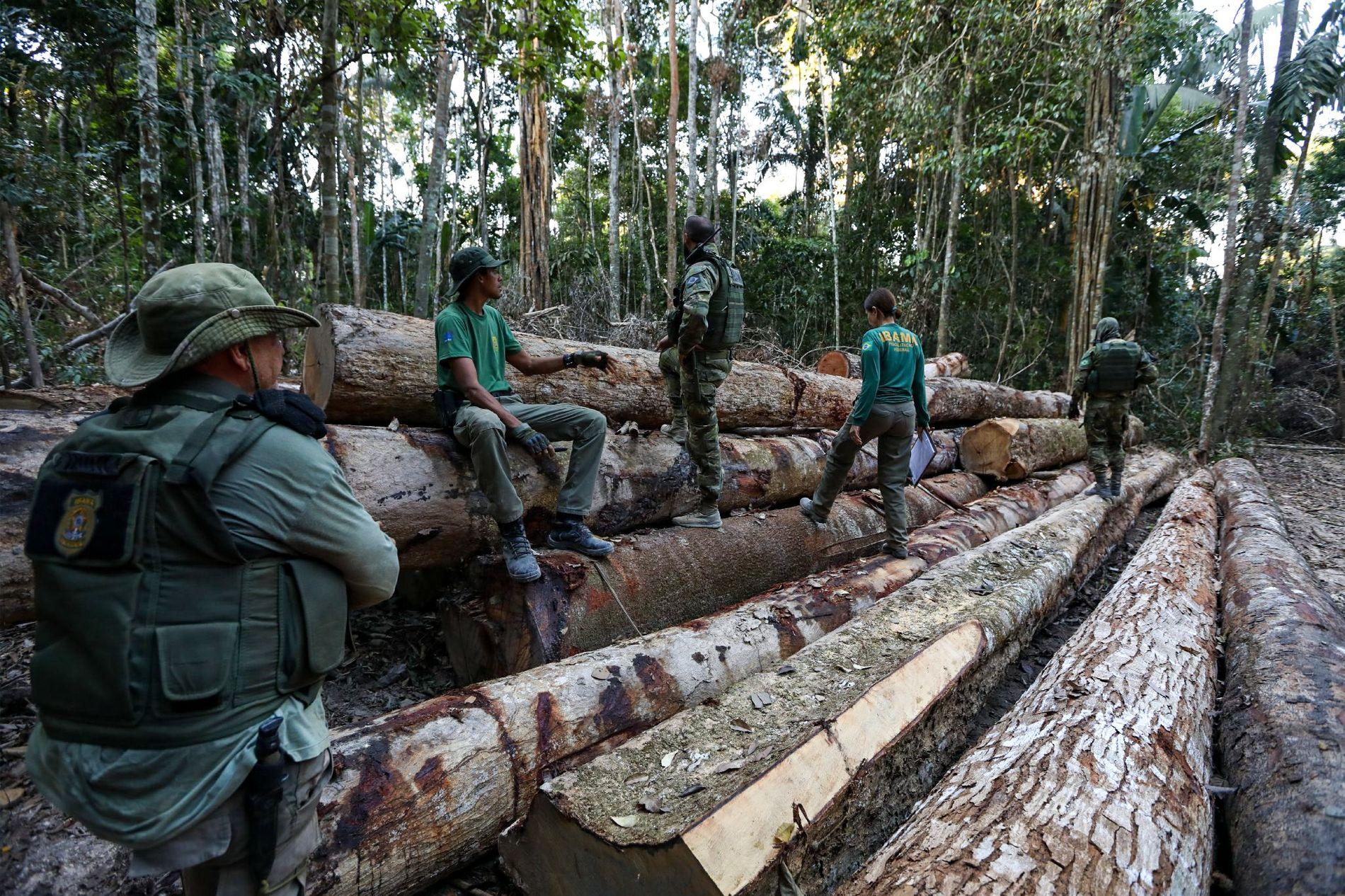 Los agentes del IBAMA descubren un alijo de madera en una carretera secundaria de Boa Vista ...