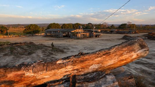 La lucha vacilante contra la explotación forestal ilegal en la Amazonia